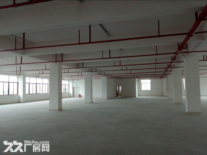 金湾1−5楼标准厂房、钢构厂房招租7元/㎡起租-图(5)