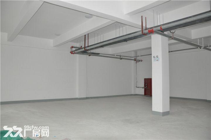 可分租2000,双港新建独院厂房5000平米出租-图(5)