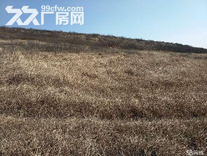 低价急租遂平嵖岈山温泉小镇对面荒山,有林权证-图(1)