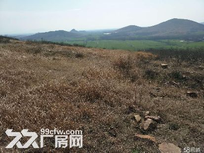 低价急租遂平嵖岈山温泉小镇对面荒山,有林权证-图(2)