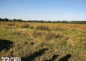 安徽滁洲市来安2021亩土地出售,仅售6.6万/亩
