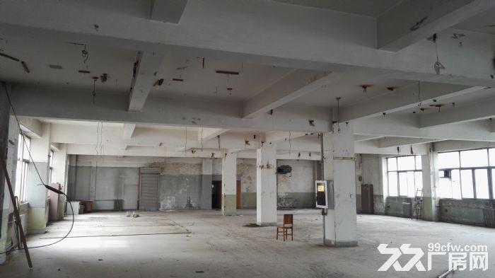 高新区高新路附近1000平米标准框架结构厂房出租-图(2)