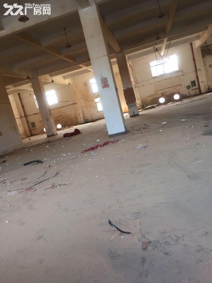 九亭工业区可分割400到1680平方一楼高6米厂房仓库出租,绿证,配套齐全-图(4)