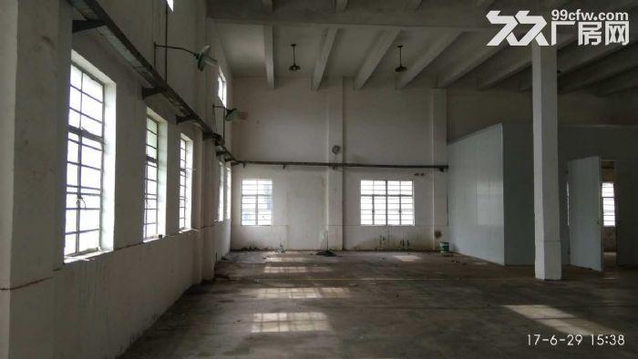 新桥4000平方一楼厂房仓库出租,可分割300平方以上,有产证,配套齐全-图(3)
