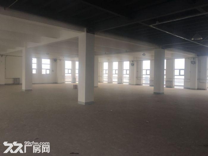 津南八里台3150平米厂房出租-图(4)