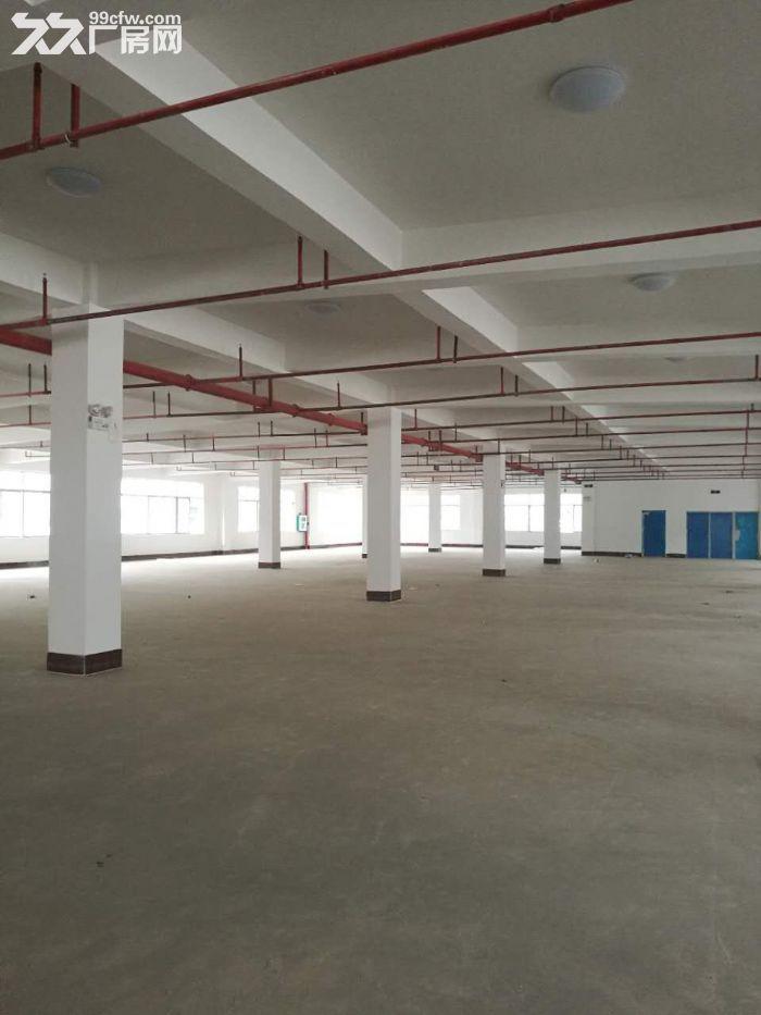 沙井1楼5楼标准工业厂房,带50年独立产权,仅3字头即可拥有-图(6)