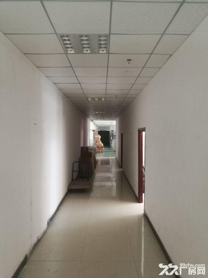 凤岗金凤凰工业园出租精装修6楼转租850平,水电齐-图(5)