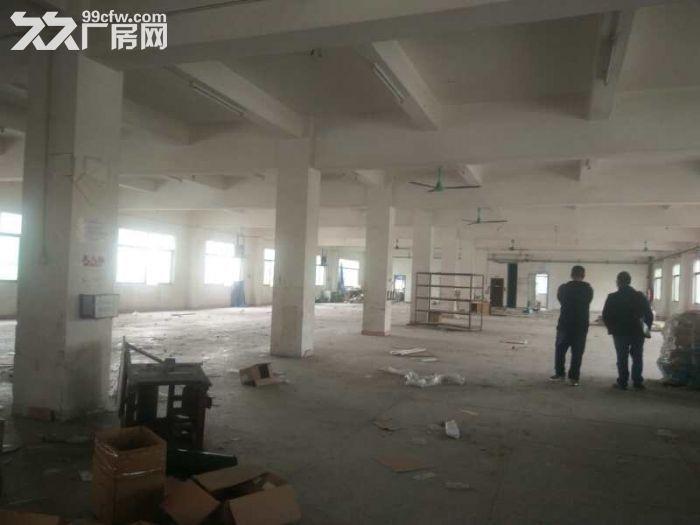 凤岗金凤凰独门独院厂房出租3150平,靠近广源物流-图(3)
