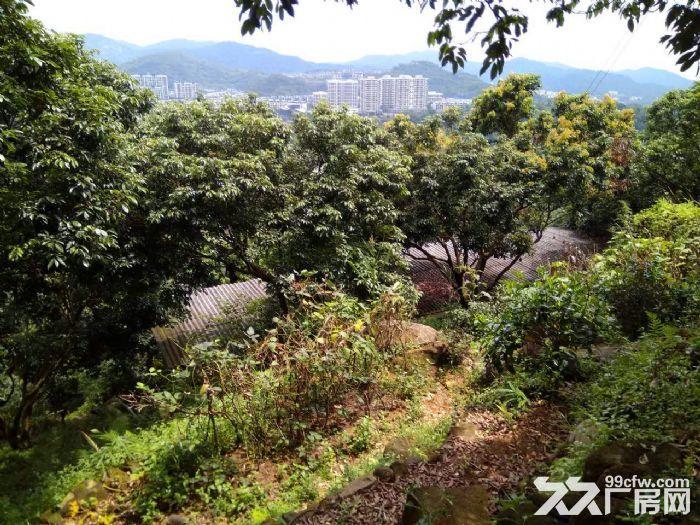 从化区温泉镇105国道边附近约90亩果园房屋转让-图(2)