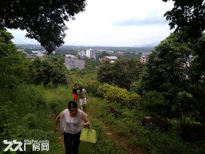 从化区温泉镇105国道边附近约90亩果园房屋转让-图(6)