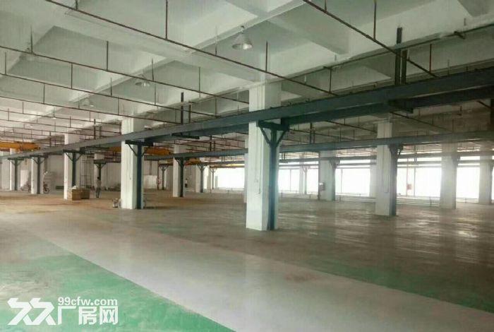 原房东!补贴!龙岗宝龙12500平红本独栋厂房出租-图(5)