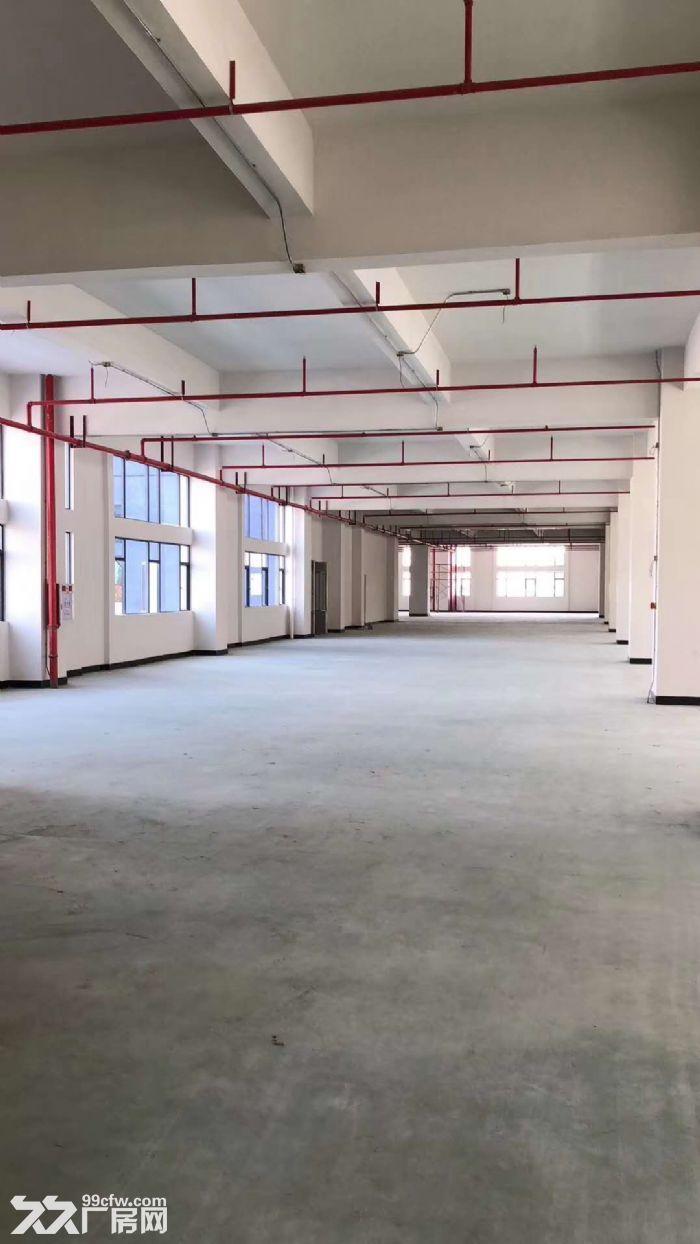 园洲标准一楼厂房1200平方,形象好-图(3)