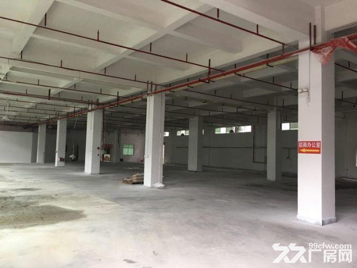 园洲标准一楼厂房1200平方,形象好-图(4)
