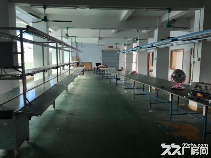 清溪清凤路旁独院厂房出租二三楼1200平,马路边上-图(4)