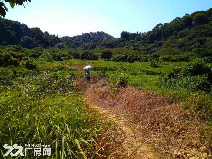 从化区太平镇1200亩山地果园平地古村落转让-图(1)
