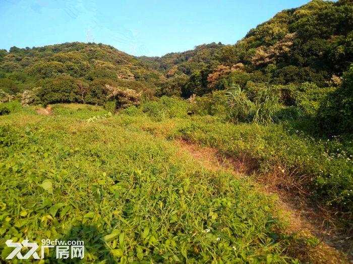 从化区太平镇1200亩山地果园平地古村落转让-图(3)