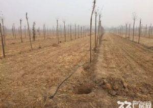 《旺铺帮》北外环渤海路运河区东花园墓地土地出售