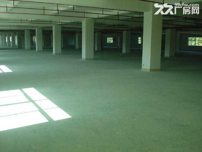 惠州市惠阳区沙田镇建富工业园标准厂房招租-图(4)