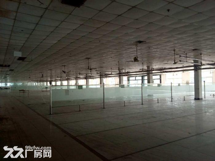 兴塔镇标准厂房仓库出租0.45元/平方-图(4)