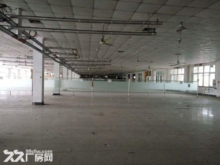 兴塔镇标准厂房仓库出租0.45元/平方-图(3)