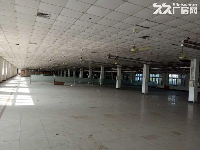 兴塔镇标准厂房仓库出租0.45元/平方-图(7)