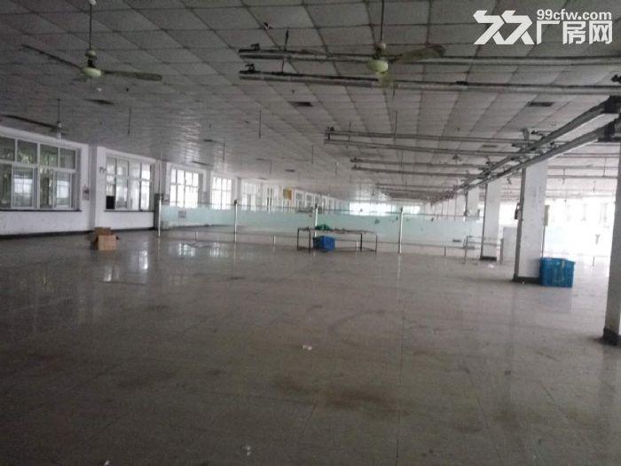 兴塔镇标准厂房仓库出租0.45元/平方-图(5)