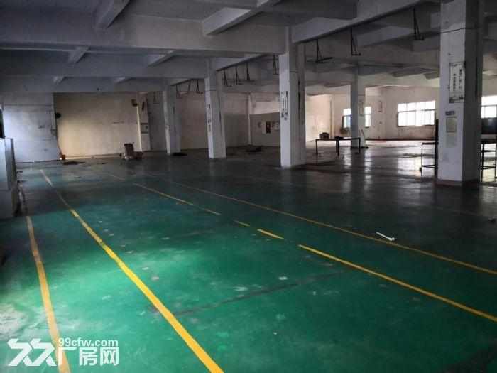 龙岗中心城独门独院厂房12800平出租可分租-图(5)