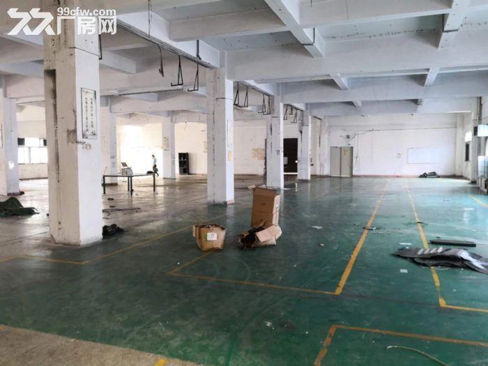 龙岗中心城独门独院厂房12800平出租可分租-图(7)