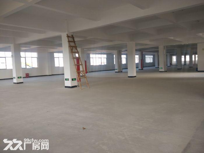 马巷钢结构厂房3万平方,标准厂房4万平方出租(可分租)-图(1)