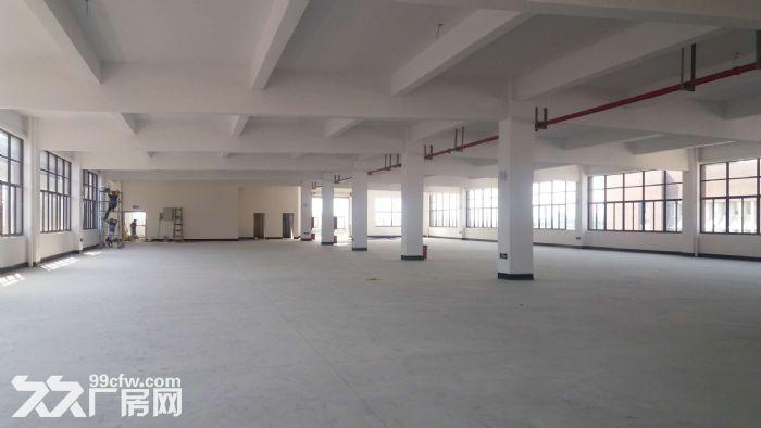 直招单层2000平整栋8000平厂房新房-图(4)