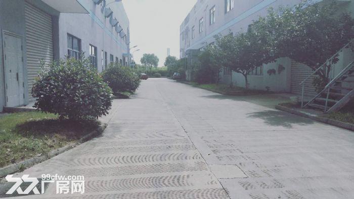 胜浦单层独栋3200平厂房出租层高9米-图(3)