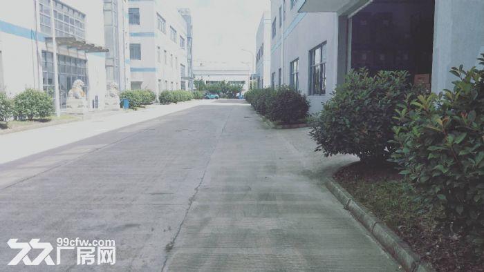 胜浦单层独栋3200平厂房出租层高9米-图(4)