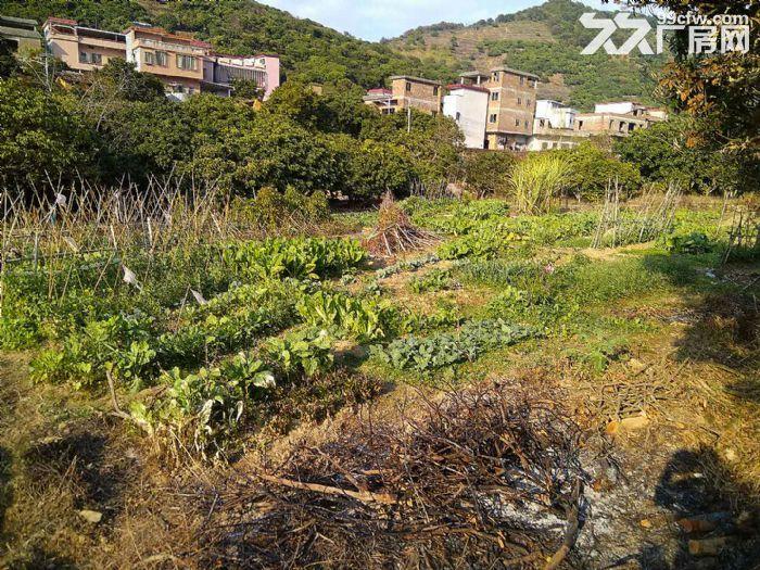 从化区温泉镇石门旅游区附近密石村30亩平地永久转让-图(6)