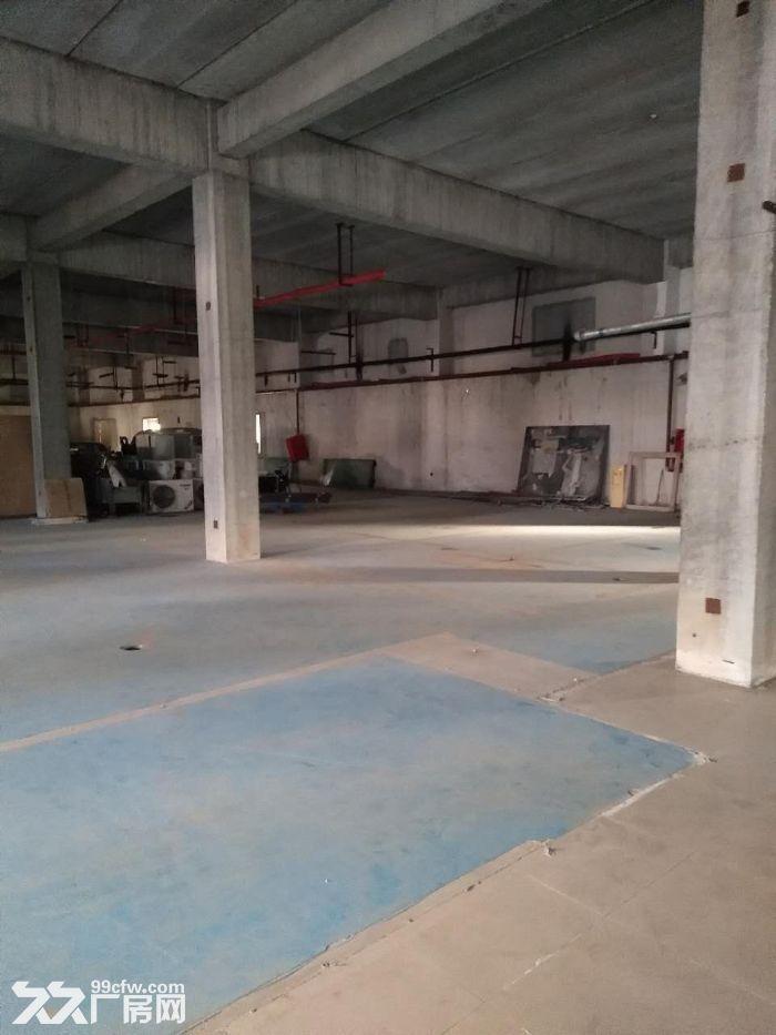 库房1200平米手续齐全1.5元-图(4)