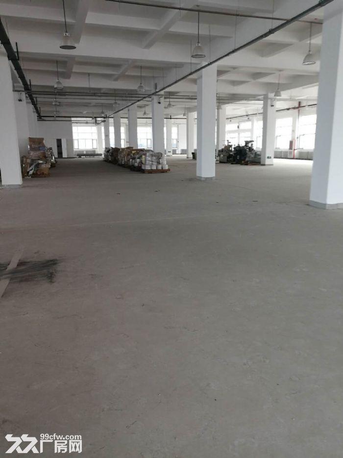 津南双港7000平米优质厂房出租-图(2)