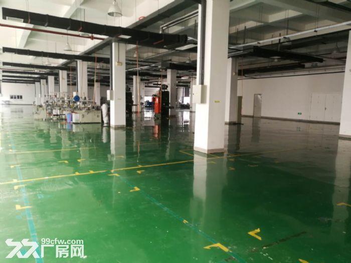 津南双港7000平米优质厂房出租-图(4)