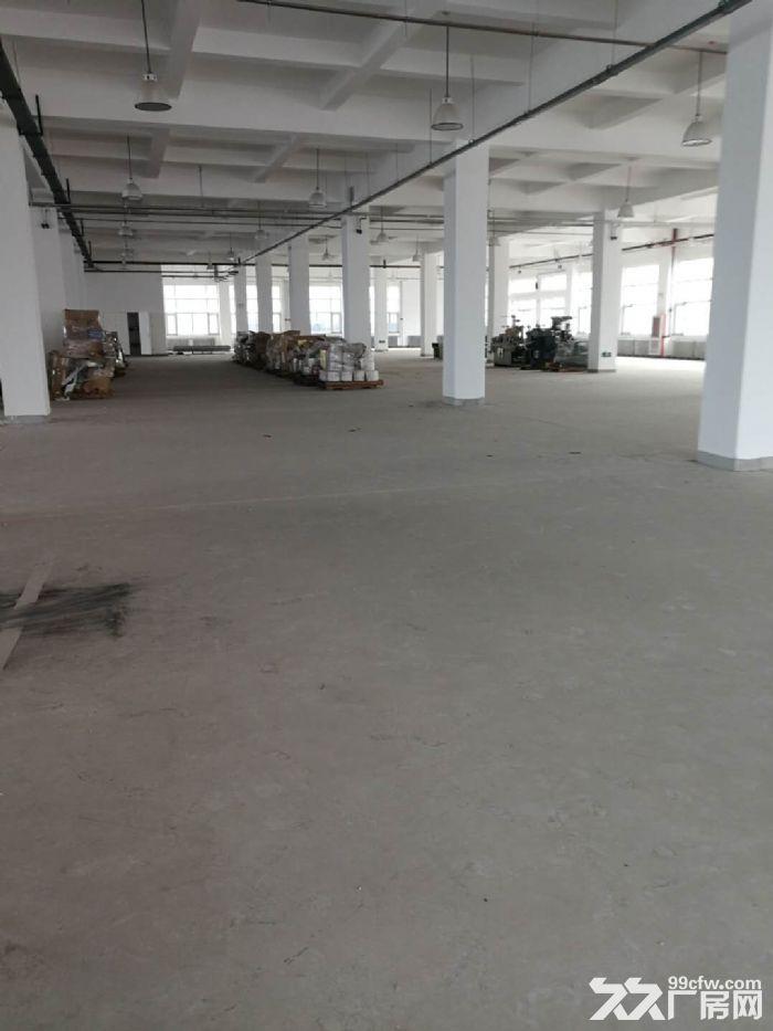 津南双港9000平米优质厂房出租-图(2)