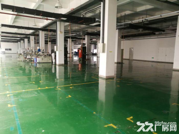 津南双港9000平米优质厂房出租-图(3)
