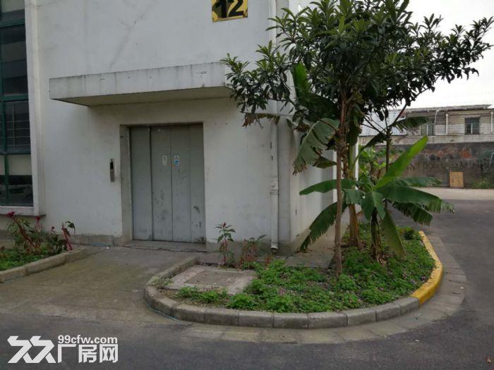 新桥镇新飞路6300平厂房仓库出租,有800平-图(2)