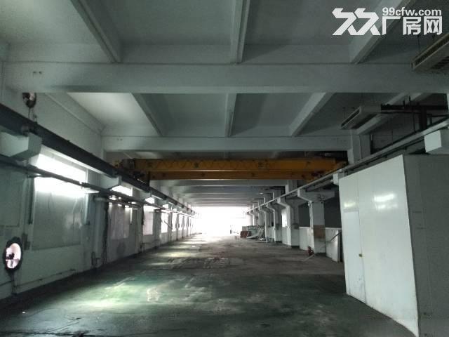 公明南光高速出口处新出独门独院厂房56448平方-图(5)
