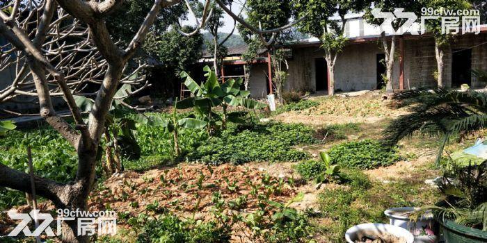 5000方农庄带装修出租,水免费。无转让费-图(6)