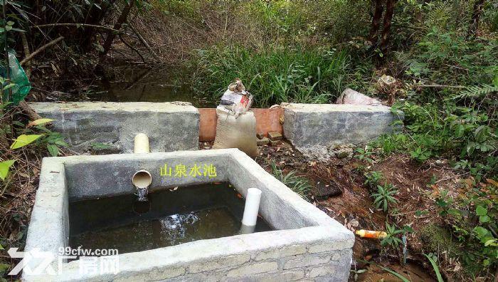 从化区良口锦村中心村291亩山地果园鱼塘转让-图(6)