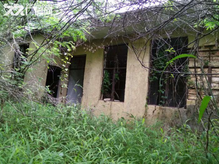 从化区温泉镇龙岗墟附近龙桥村160亩山地果园房屋转让-图(3)