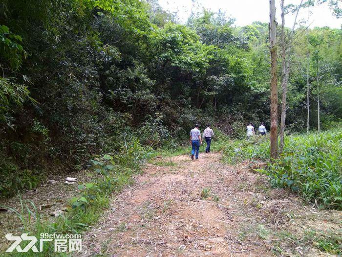 从化区温泉镇龙岗墟附近龙桥村160亩山地果园房屋转让-图(7)