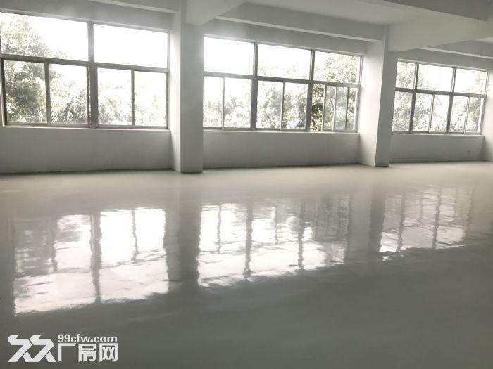 出租新区旺庄长江路周边3900平独栋厂房-图(2)