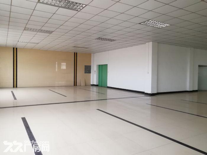 狮山3层独门独院厂房招租4500平方-图(5)