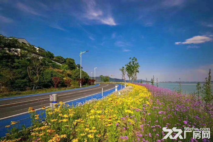 不限购吴中太湖可以让你多活十年的房子真实照片视频随时看房自住投资首选-图(3)