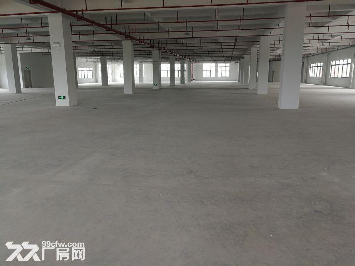 惠东全新工业园标准厂房面积五万平米,可分租-图(3)