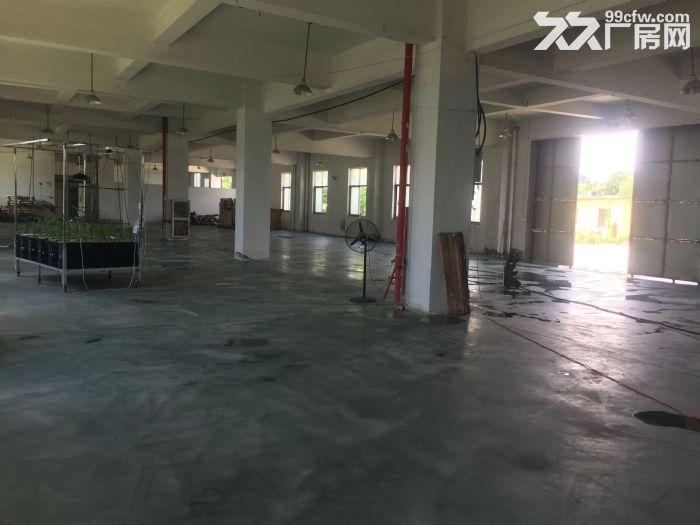 阳明资料一楼厂房仓库出租1200平方米-图(3)