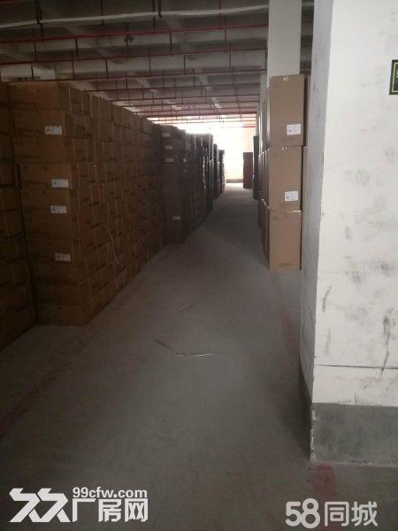 回兴园区一楼2000平仓库出租面积可分-图(3)